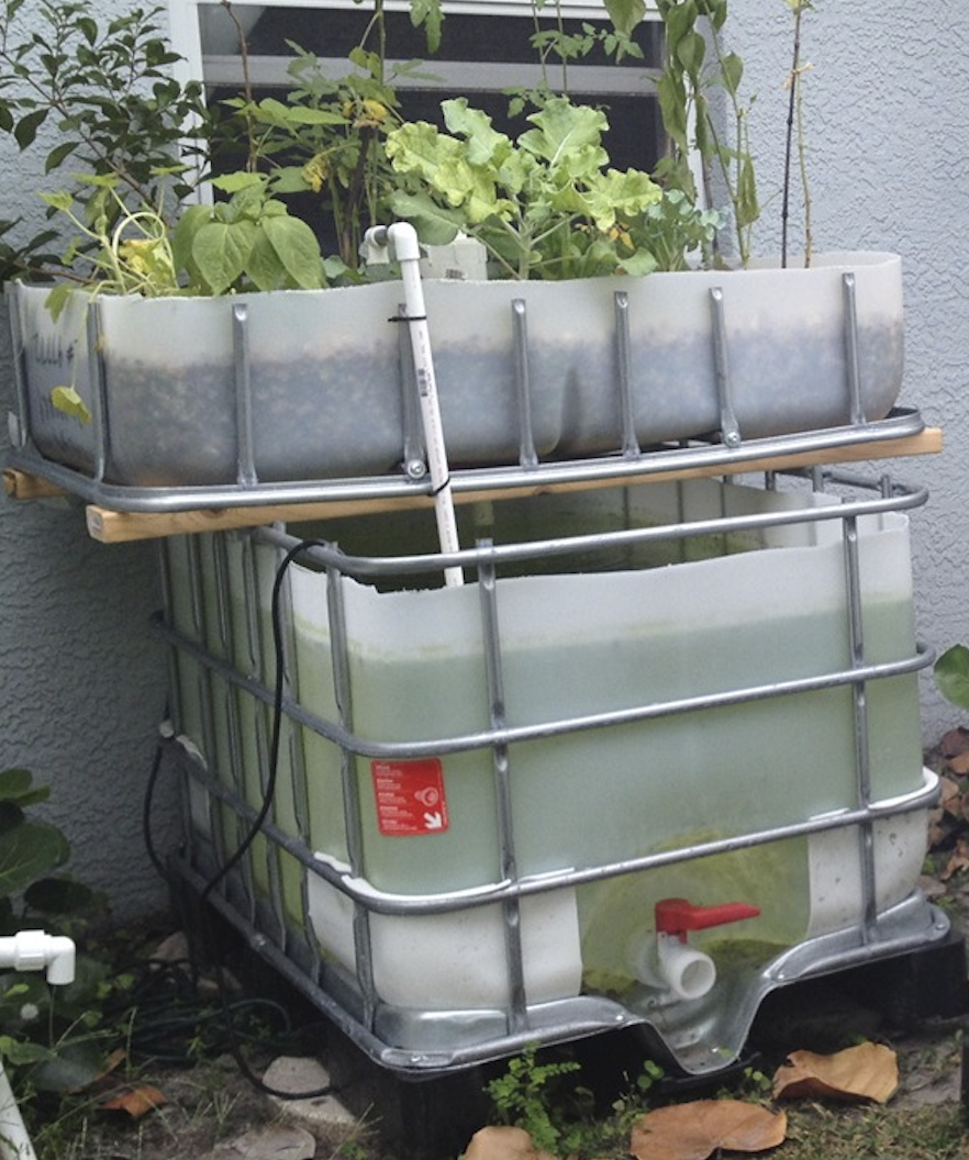 Aquaponics fish tank and grow bed container options for Fish used in aquaponics